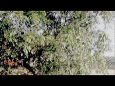 Territorio de la ausencia, de Ramón García Mateos - Parte V - De: Triste es el territorio de la ausencia, 1998 - Voz: Joaquín de la Buelga