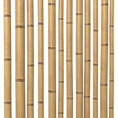 3D Model Bamboo Stem Dry - 3D Model