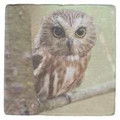 Small Baby Owl (Ontarios) Stone Coaster Animals And Pets, Baby Animals, Cute Animals, Photography Gifts, Animal Photography, Stone Coasters, Custom Coasters, Small Baby, Baby Owls