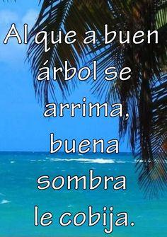 ☀ Puerto Rico ☀ Al que a buen arbol se arrima,buena sombra le cobija ~ At that snuggles good tree, good shade shelters