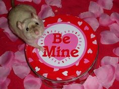 Ratties added a new photo. Cute Rats, Ex Machina, Cute Memes, Wholesome Memes, Rodents, Reaction Pictures, Pink Aesthetic, Loving U, Red And Pink