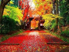 Autumn in japan-Golden autumn landscape wallpaper Japanese Nature, Japanese Landscape, Of Wallpaper, Nature Wallpaper, Mobile Wallpaper, Microsoft Wallpaper, Beautiful Wallpaper, Landscape Photos, Landscape Photography