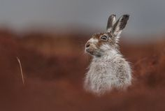 The British Wildlife Photography awards 2016 winners - in pictures