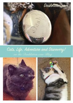 One of the colest sites on the cat interwebs. We have adventure stories (with the AdventurCats) we have product revies that got us a Finalist place at the BlogPaws Nose to Nose Awards in 2017. We have fun, we make discoveries and we know so many other kitties on the 'net you need to see!
