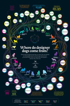 Where Do Designer Dogs Come From? by time.com #Designer_Dogs