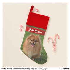 Fluffy Brown Pomeranian Puppy Dog Christmas Stocking Christmas Animals, Christmas Dog, Christmas Card Holders, Christmas Cards, Pet Christmas Stockings, Santa Claus Is Coming To Town, Pomeranian Puppy, Dogs And Puppies, Pets