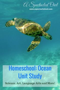 """This Ocean Unit Study can be adapted for all grade levels Preschool through I've included Science Art Literature and """"Everything Else"""". Homeschool Kindergarten, Homeschool Curriculum, Preschool, Online Homeschooling, Ocean Lesson Plans, Ocean Projects, Stem Projects, Science Projects, Ocean Activities"""