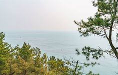 Does anybody know what these rectangles are in the water? I took this photo from the top of a hill on the coast of Busan South Korea. I'm assuming it's seaweed farming but could be fish scallops oysters... I have no idea. Plz hlp. . . . . . . . #rectangle #farm #farming #ocean #sea #UpOnAHill #hill #seaweed #fish #boat #boats #coast #SeaFarm #Busan #south #korea #SouthKorea #Asia #TopOfTheHill #Spring #travel #TravelMore #TravelPost #TravelAllThePlaces #InstaTravel #daily #DailyPost…