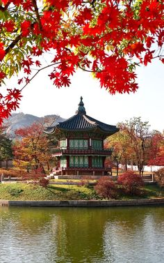 Setting off to chase this year's fiery reds and oranges? Here are the top spots to see autumn in South Korea - in Seoul and the countryside.