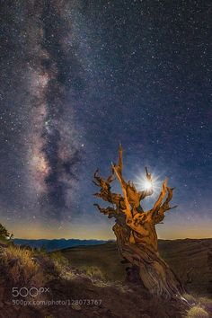 Ancient Bristlecone Pinetree's Moon & Milky Way by JTPatterson. Please Like http://fb.me/go4photos and Follow @go4fotos Thank You. :-)