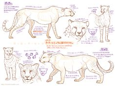 Marvelous Drawing Animals In The Zoo Ideas. Inconceivable Drawing Animals In The Zoo Ideas. Cat Anatomy, Anatomy Drawing, Cat Drawing, Animal Anatomy, Animal Sketches, Animal Drawings, Art Sketches, Drawing Techniques, Drawing Tips
