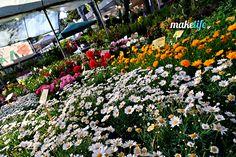 Όταν λέω ιδανικά λουλούδια για το μπαλκόνι μου εννοώ τα πιο ανθεκτικά, που δεν θέλουν πολύ περιποίηση και που κοστίζουν φυσικά λιγότερο. Gelato Shop, Diy Room Decor, Good To Know, Greek, Backyard, Flowers, Plants, Gardening, Balcony