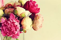 Peonies by Anna_Ok on Creative Market