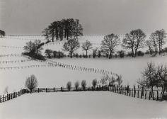 Albert Renger-Patzsch. Winter Landscape with Oak Grove, Wamel. c. 1955