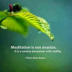 ...meditation is not evasion. It is a serene encounter with reality... ~ Thich Nhut Hanh