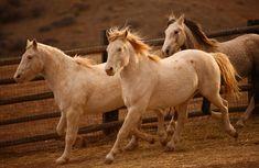 Wild Mustang Horses | HORSES-1-superJumbo.jpg