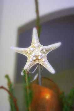 Use a bumpy starfish for a natural beach tree topper. You may find bumpy starfish at http://www.seasideinspired.com/natural_sea_life.htm