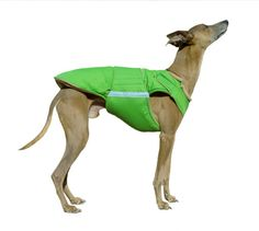 Greyhound dog coat - Extra warm winter dog jacket - Custom dog winter coat - Waterproof / Fleece - made to order Waterproof Dog Coats, Dog Winter Coat, Dog Raincoat, Grey Hound Dog, Dog Jacket, Dog Wear, Dog Sweaters, Warm Coat, Beige