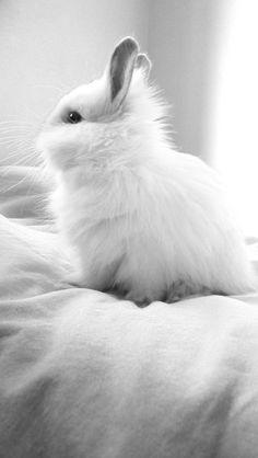 #RogersWinterWhites    White love by ~catarinamzfernandes on deviantART