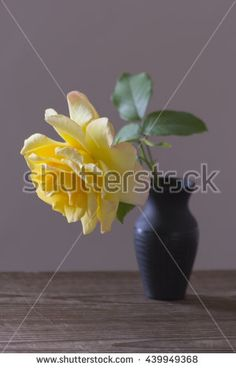 Yellow rose in black vase on a gray background Image ID:439949368 Copyright: Alina Craita