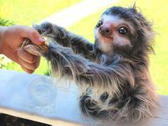 Талантливая художница-самоучка с Аляски Ли Кросс (Lee Cross) увлекается созданием игрушек с 12 лет. Ее замечательные зверушки выглядят такими живыми, что кажется, сейчас запрыгнут на колени и уткнутся теплой мордочкой в ладонь. Источник: https://www.adme.ru/tvorchestvo-hudozhniki/hudozhnica-delaet-igrushki-kotorye-vot-vot-ozhivut-1376915/ © AdMe.ru