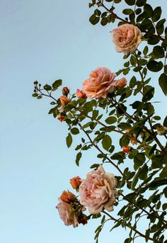 ideas wallpaper iphone simple summer for 2019 Aesthetic Pastel Wallpaper, Aesthetic Backgrounds, Aesthetic Wallpapers, Iphone Background Wallpaper, Flower Wallpaper, Iphone Wallpaper Travel, Vintage Flowers Wallpaper, Wallpaper Art, Flower Aesthetic