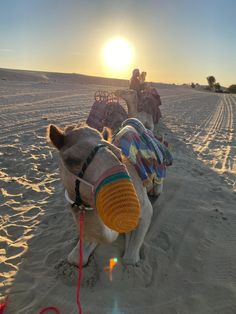 What to do in four days in Dubai ⋆ Delphine Blu Dubai Tourism, Dubai Travel, Four Days, Dubai Desert, Burj Al Arab, Blockbuster Movies, The Dunes, Boat Tours, Camels