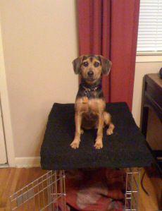 8 Common Dog Training Errors: Cautionary Tales