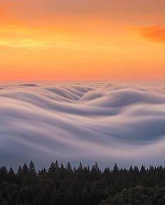 Mount Tamalpais State Park, CA, U.S. | Photography by © Nick Steinberg (@nicholassteinbergphotography) #earthofficial
