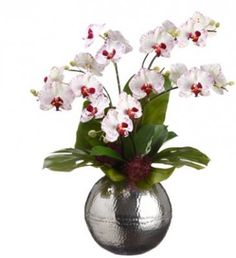 White Phalaenopsis Silk Orchid Arrangement with Silver Vase ARWF1258