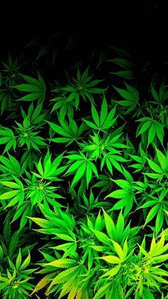 Cannabis Wallpaper, Weed Wallpaper, Kawaii Wallpaper, Graphic Wallpaper, Aesthetic Iphone Wallpaper, Dark Green Aesthetic, Verde Neon, Weed Plants, Medical Marijuana