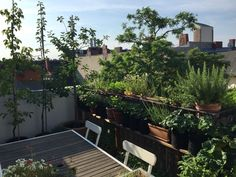 Roof Top, Plants, February, Plant, Planets