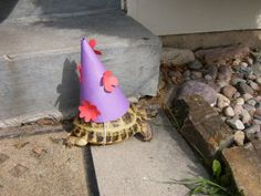 Party tortoise is ready to party!
