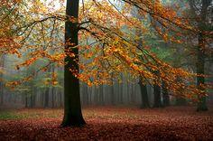 Осенняя подборка: prophotos_ru