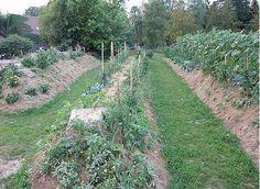 Permakultura savetuje uzgajanje voća i povrća bez zalivanja i đubrenja: napravite uzdignute leje - Lisa - Sve što čini moj život!