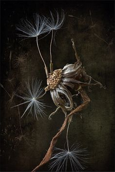 the old dandelion | still life the old dandelion | Elena Eremina | Flickr Little Brown, Brown And Grey, Organic Art, Warm Colors, Cool Eyes, Still Life, Fairy Tales, Photo Galleries, Abstract Art