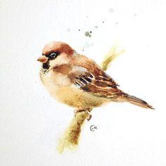 Watercolor Sparrow Bird  Original Painting 7 4/5 by CMwatercolors