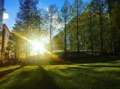Beautiful sunshine on London #london #england #britain #theunitedkingdom #sunset #sunsetview #sunshine #sky #skyview #amazing #beautiful #travel #traveler #traveling #travelgram #travelling #journey #trip #landscape #nature #view #tour #wanderlust #tourism #tourist #awesome #wonderful #wonderful_places by travel__p