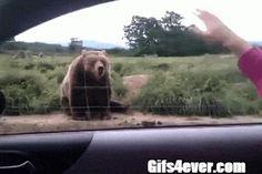 Buenos días oso!