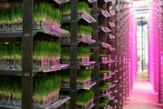 Urban Produce vertical farm grows 16 acres of food in just 1/8 acre of space