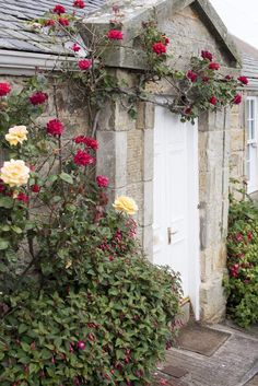 Colorful deep red roses trailing around a closed white painted cottage door in a… Cottage Door, Rose Cottage, Yellow Roses, Red Roses, Free Photos, Free Images, Door Images, Stone Facade, Painted Cottage