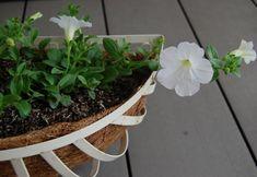 バラやクレマチスの花の香りが漂い、街が鮮やかな新緑に包まれる初夏。 夏野菜の種まきをしたり夏花の苗を植え付けた… Planter Pots
