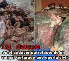 SandRamirez contra el maltrato animal. • www.luchandoporellos.es: HOLOCAUSTO ANIMAL, LAS VÍCTIMAS.