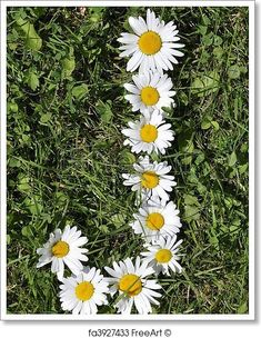 Free art print of Letters of daisies. Get up to 10 Gallery-Quality Art Prints for Free. Daisy Flower Pictures, Letter Art, Letters, Stylish Alphabets, Flower Collage, Beautiful Nature Wallpaper, Free Art Prints, Flower Power, Artwork