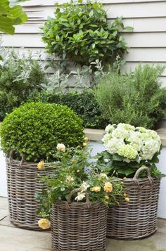 small garden can be quite large to come out with the right small garden design ideas. modern garden designs for small gardens Back Gardens, Small Gardens, Outdoor Gardens, Garden Cottage, Garden Pots, Garden Basket, Potted Garden, Garden Bar, Dream Garden