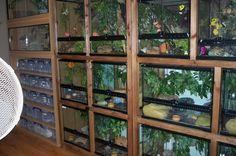A Exo Terra terrarium wall at suez-jewels geckos in the UK. I WANT ALL THOSE BEAUTIFUL REPTILES