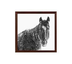 "Snowy Black Horse by Jennifer Meyers, 25 x 25"", Ridged Distressed, Espresso, No Mat"