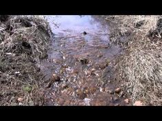 Recreating wetland-stream complexes in urban watersheds