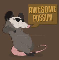 possum images - Google Search