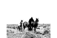 Mustang Trio by Cindy Bennett